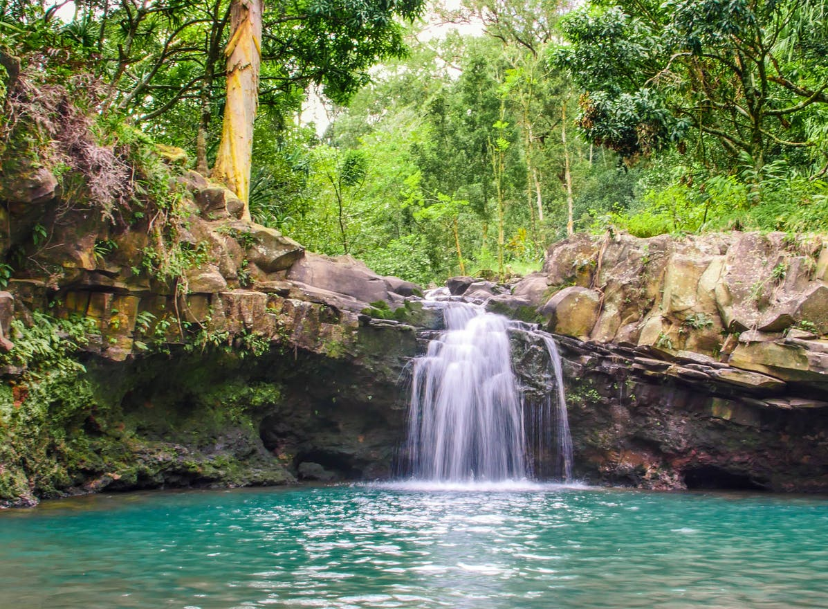 Product Waterfall & Rainforest Hike With Transportation