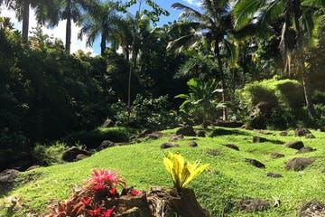 Product Botanical Garden Walk & Chocolate Tour